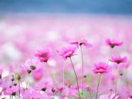 flores-frutos